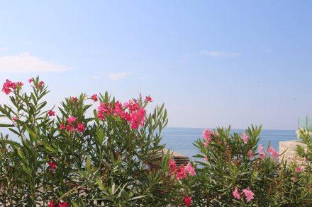 Blühender Oleander unter blauem Himmel.