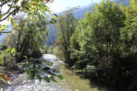 Naturbelassene Flussvegetation entlang der Mur.