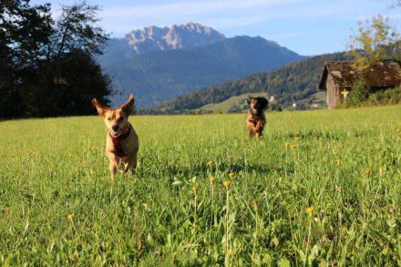Die wilde Jagd vor dem majestätischen Hintergrund des Trogkofels.