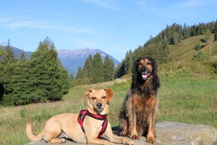 Meine Wandergesellschaft Ella und Lucy.