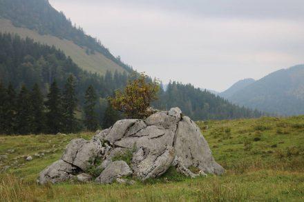 Die Alm unter der Freudenreich Hütte mit natürlichem Deco-Stein.