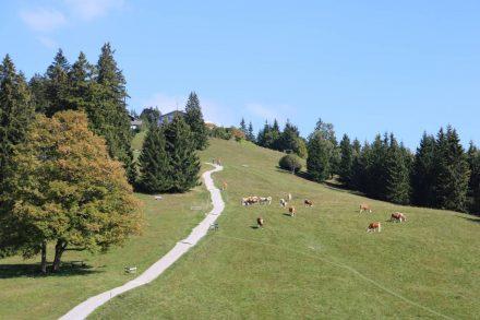 Der letzte Anstieg nach Neureuth.