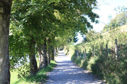 Der Weg zum Schliersberg hinauf ist fast eine Allee.