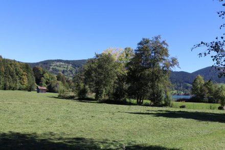 Die herrlich grüne Aussicht von meinem Stellplatz auf dem Camping Lido.