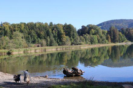 Am Badestrand des Campingplatzes sind in der Nebensaison auch Hunde erlaubt.