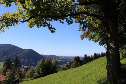 Wunderschöne grüne Hügel und ein Blick ins traumhafte Bayerische Land.