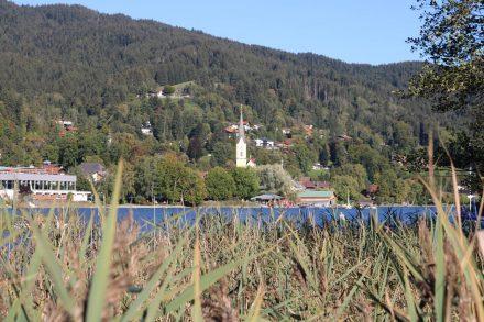 Durch den Schilfgürtel spitzt die Kirche von Schliersee.