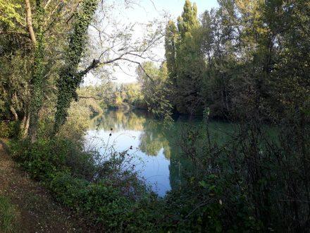 Immer wieder lädt die naturbelassene Ufervegetation zum Staunen und Fotografieren ein.