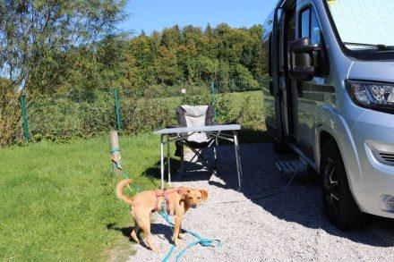 Mein toller Camping Stellplatz mit genügend Freiraum für die Fellnasen.