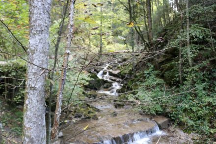 Der Weg durchs Alpbachtal nach Tegernsee ist leicht zu erwandern.