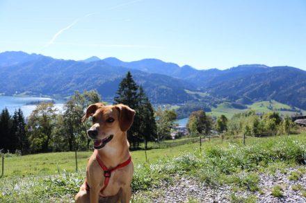 Panorama-Hund an der Schliersberg Alm.