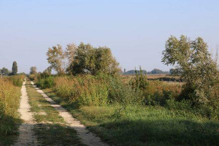Von Barricata bis Scardovari auf dem Dammweg.