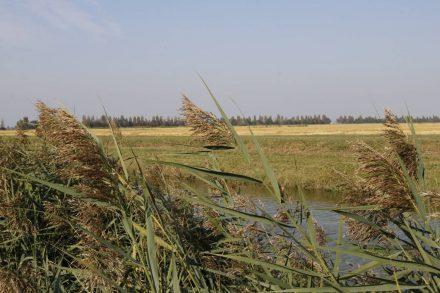 Das ganze Gebiet ist von Wasserkanälen durchzogen, die auch jetzt im Herbst alle gefüllt sind.