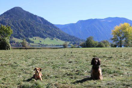 Gleich neben dem Campingplatz gibts eine große Spielwiese mit frischem Heu.
