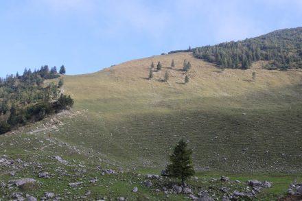 Auf halbem Weg liegt das weitläufige Plateau der Ankelalm.