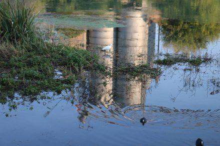 Die Spiegelung des verlassenen Zementwerks ergibt mit den Wasservögeln ein skurriles Bild.