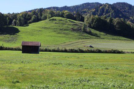 Saftig grüne Wiesen im hügeligen Tegernseer Land.