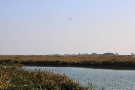 Das Po-Delta ist ein Paradies für Vögel aller Art.