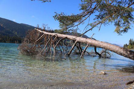 Ein umgestürzter Baum im See ist natürlich als Fotomotiv sehr einladend.