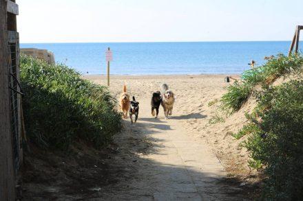 Die Partytruppe - drei wilde Strandfellies und Leo aus Franken.