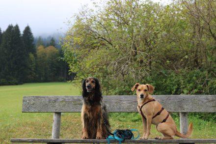Jetzt geht's los - Lucy und Ella sind bereit.