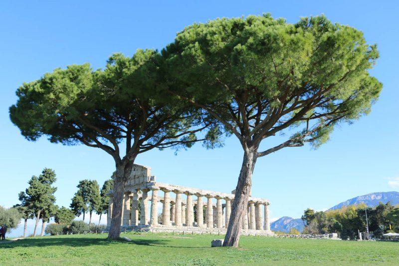 Die statuesken Bäume sind fast genauso prächtig wie die Paläste.