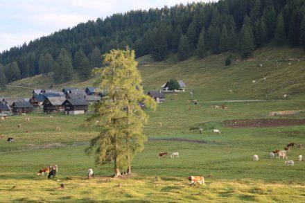 Auf der Eggeralm starten wir in Richtung Poludnig mit einem wachsamen Blick auf das Weidevieh.