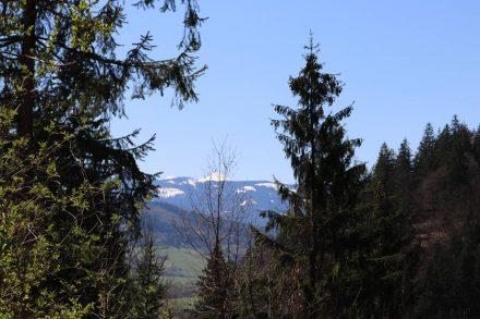 Auf dem Aufstieg blitzen die gegenüberliegenden Berge durch die Baumwipfel.