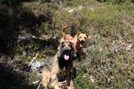 Lucy und Ella nach dem Aufstieg.