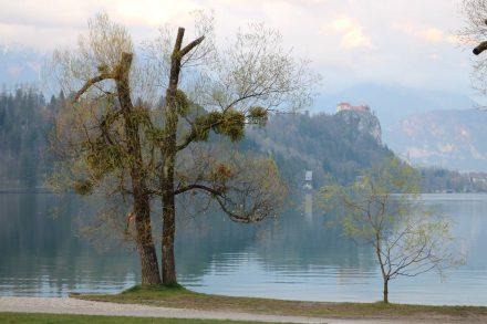 Die Burg von Bled thront hoch über dem See auf einem Felsplateau.