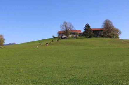 Der Radweg rund um den Wallersee führt an grünen Wiesen und Bauernhöfen vorbei.
