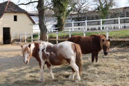 Die Ponys im Freilauf.