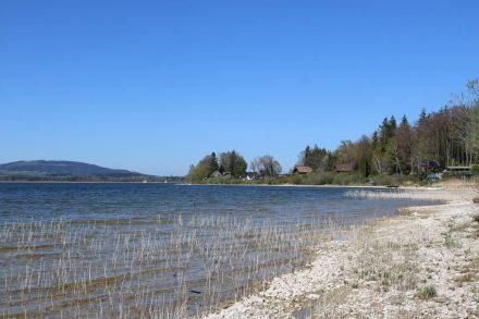 Ruhig kann man die Frühlingssonne am Uferweg des Wallersee genießen.