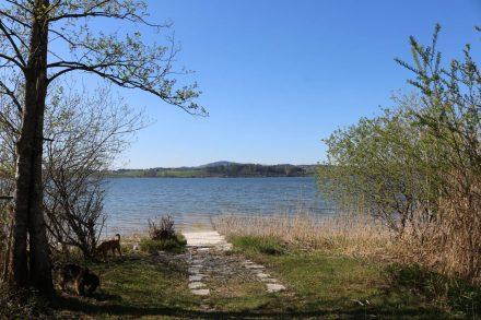 Am Uferweg kann man rund 2 Kilometer am Wallersee entlang wandern.