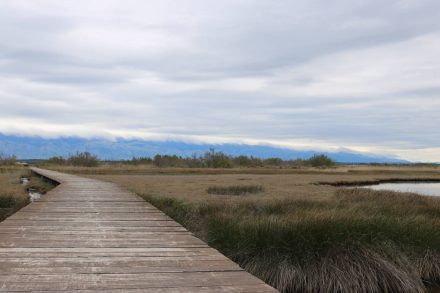 Das Naturschutzgebiet mit seinen Leichtwasser-Biotopen kann man nur zu Fuß erreichen.