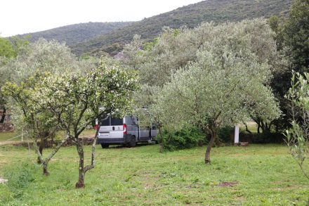 Der idyllische Campingplatz Zakono liegt zwischen Olivenbäumen.
