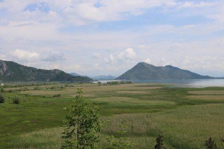 Auf Seehöhe liegt Virpazar, das durch einen breiten Schilfgürtel vom See getrennt ist.