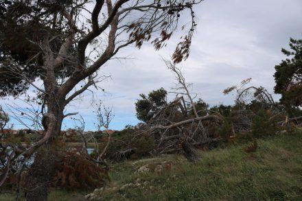 Die Bora, ungewöhnlich für Mai, hat viele Schäden in Dalmatien angerichtet.