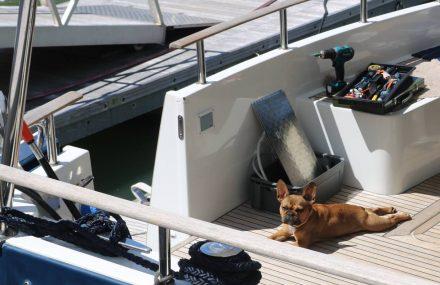 So sieht ein relaxter Yacht-Hund aus.
