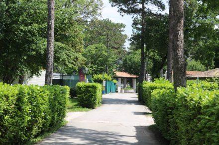 Der wunderschöne Baumbestand im grünen Camping Village Mare Pineta.