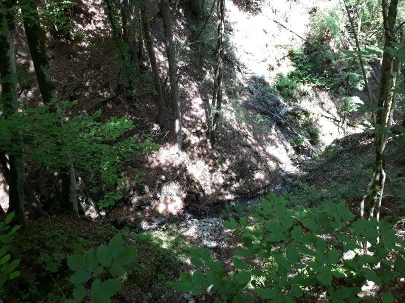 Auch ein Bächlein schlängelt sich durch den Wald.