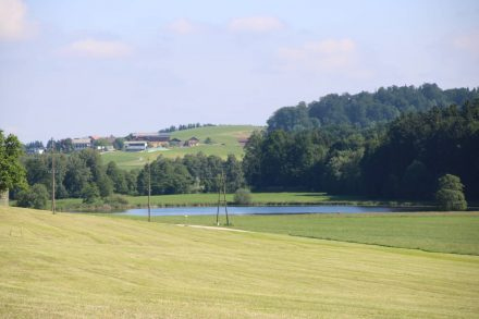 Oberegelsee im Naturschutzgebiet.