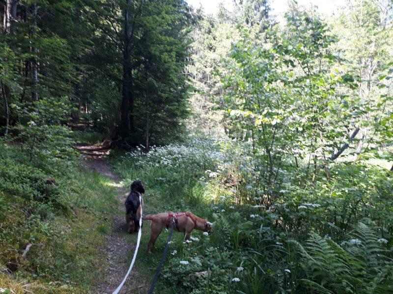 Schattig geht es durch den Wald bis hinauf nach Laas.