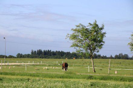 Durch grüne Wiesen und vorbei an Kühen und Pferden.
