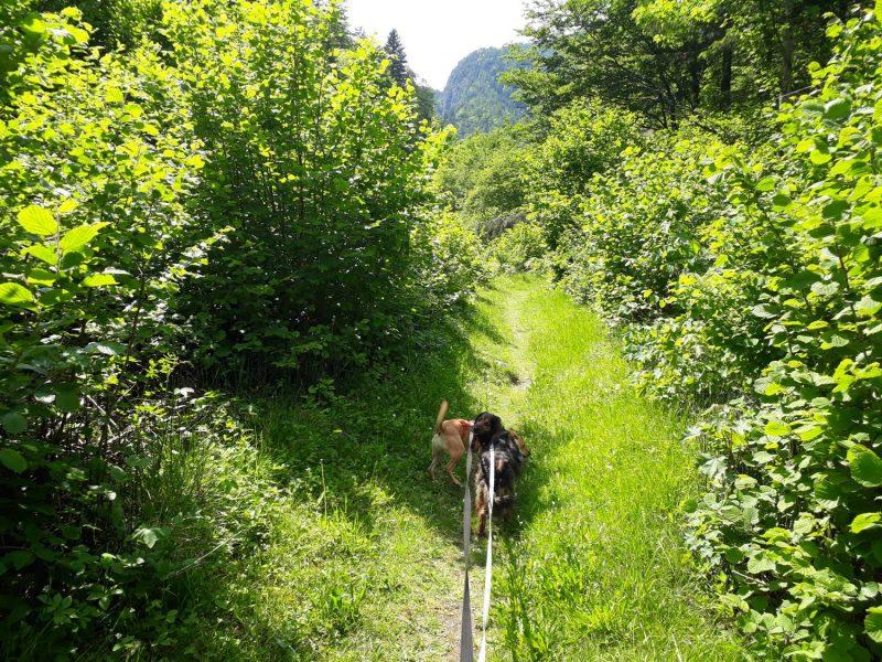 Durch viel Grün gehts von Laas rund um den Pittersberg.