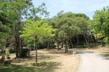 Ruhig, entspannt und mit wunderschönem Baumbestand wirkt der Camping Pola sehr einladend.