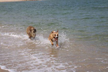 Am Hundestrand haben die Fellnasen mächtig Spaß.