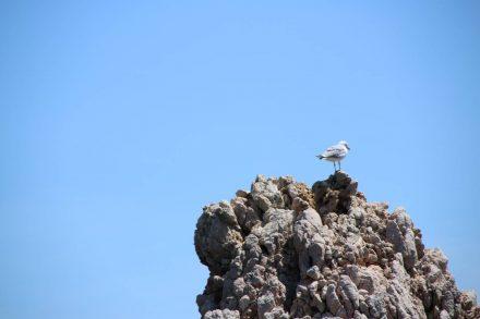 Auf dem höchsten Punkt des Felsen hat eine Möwe ihren Aussichtsposten.