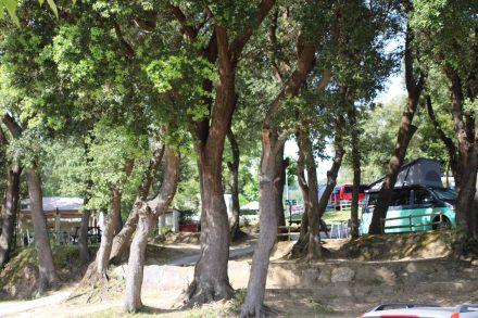 Schatten spendende Bäume und kleine Terrassen machen den Camping Arrien so gemütlich.