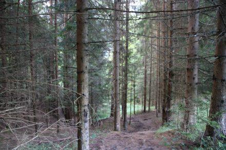 Der kleine Waldpfad zum Jurez-Graben.